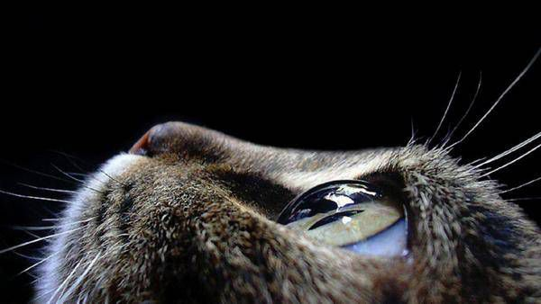 macrofotografía animales ojos (38)