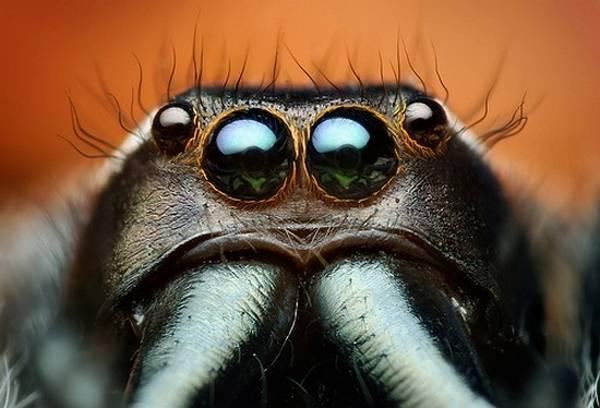 macrofotografía animales ojos (12)