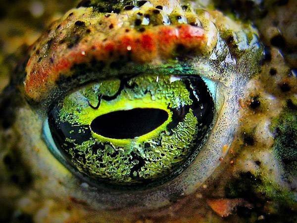 macrofotografía animales ojos (13)