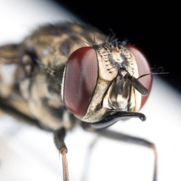 macrofotografía animales ojos (37)