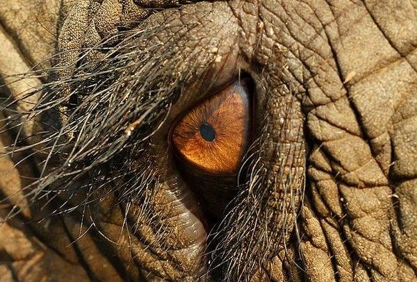 macrofotografía animales ojos (14)