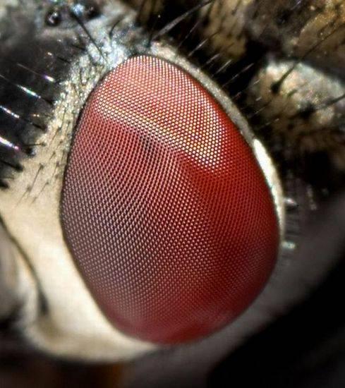 macrofotografía animales ojos (15)
