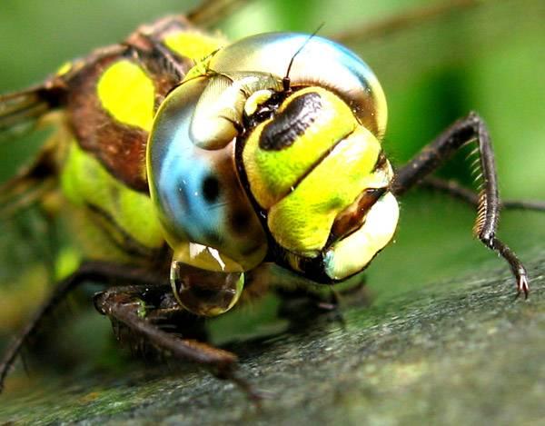 macrofotografía animales ojos (17)