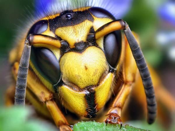 macrofotografía animales ojos (18)