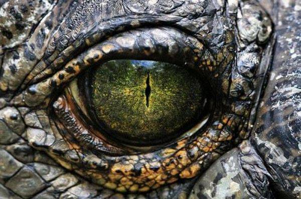 macrofotografía animales ojos (19)