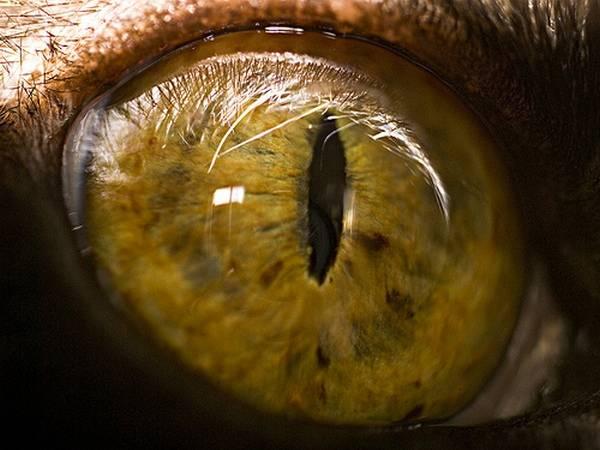 macrofotografía animales ojos (20)