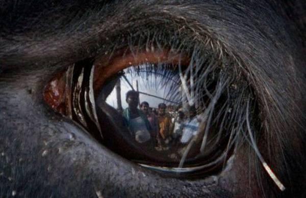 macrofotografía animales ojos (21)