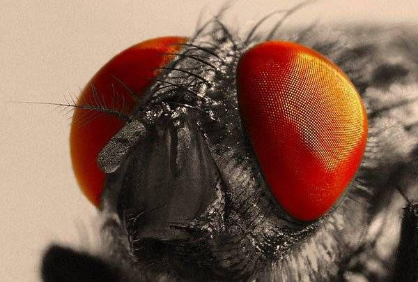 macrofotografía animales ojos (35)