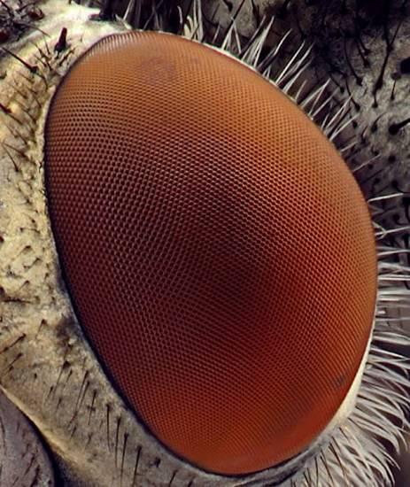macrofotografía animales ojos (22)