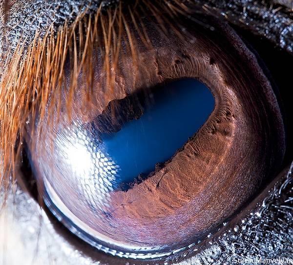 macrofotografía animales ojos (23)