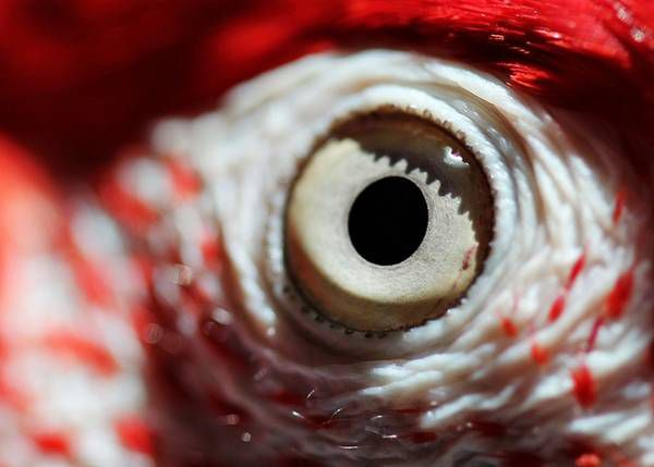 macrofotografía animales ojos (34)