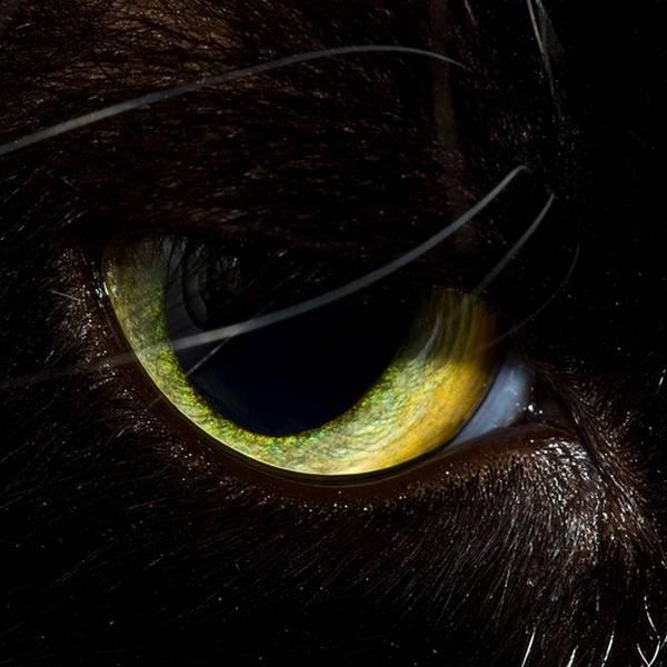 macrofotografía animales ojos (24)