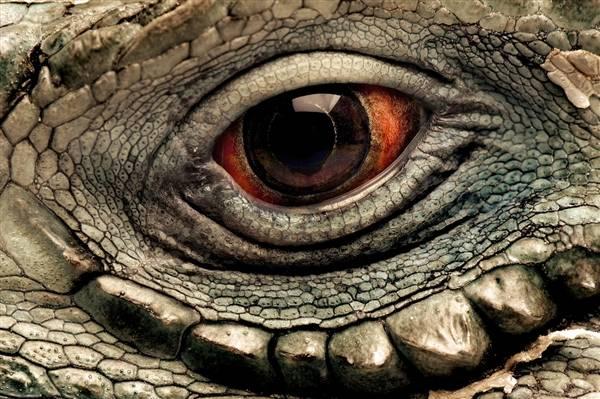 macrofotografía animales ojos (25)