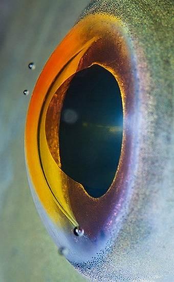 macrofotografía animales ojos (26)