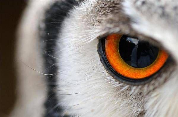 macrofotografía animales ojos (33)