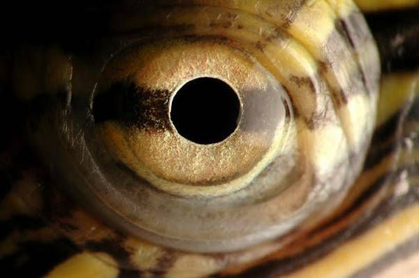 macrofotografía animales ojos (32)
