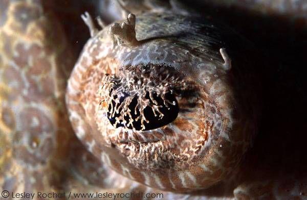 macrofotografía animales ojos (31)