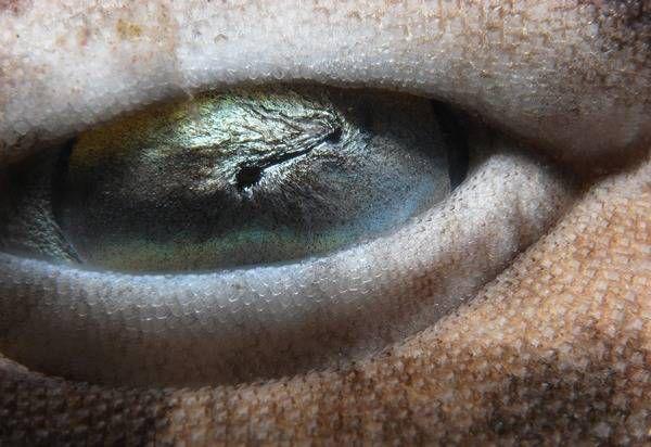 macrofotografía animales ojos (30)