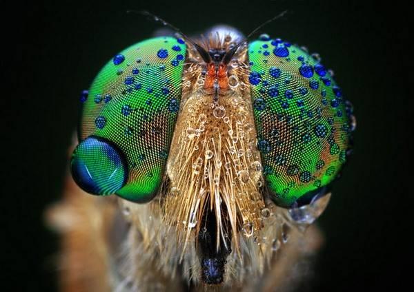 macrofotografía animales ojos (28)