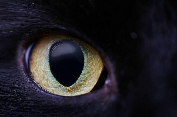 macrofotografía animales ojos (29)