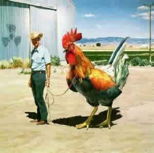 gallina gigante