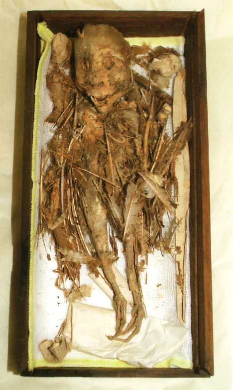 Momia Tengu Museo de Hachinohe