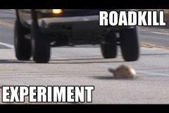 Animales en carretera, ¿salvarlos o matarlos?