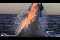 Ataques de tiburón en cámara lenta