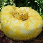 ¿No es una serpiente?, adivina ¿qué es?