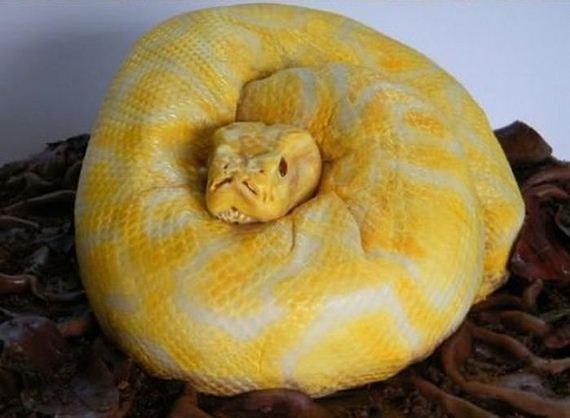 Piton Serpiente Pastel (1)