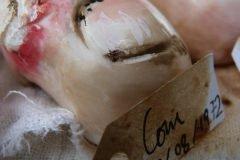 galletas asquerosas (4)