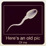 La primera espermarquia