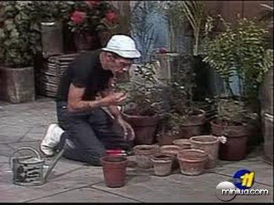 Don Ramon trabajando (8)