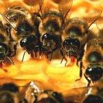Los insectos más mortales
