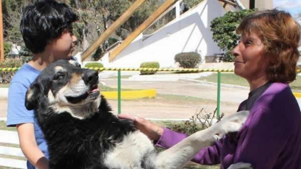 Capitan perro del cementerio (1)