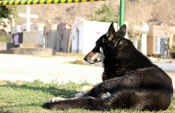 Capitan perro del cementerio (8)