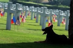 Capitan perro del cementerio (7)