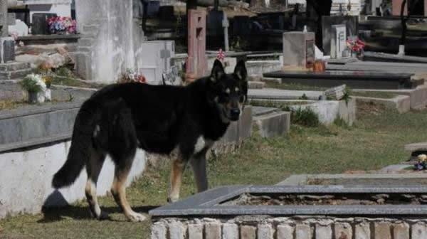 Capitan perro del cementerio (5)