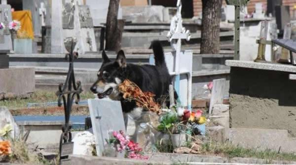 Capitan perro del cementerio (4)