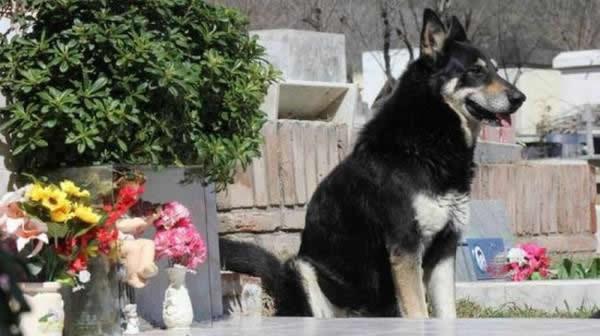 Capitan perro del cementerio (3)