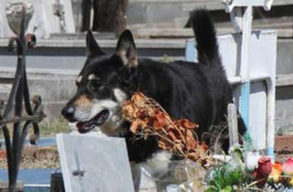 Capitan perro del cementerio (2)