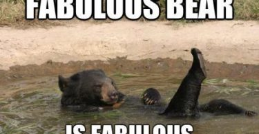 fabulous bear is fabulous
