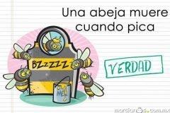 abejas picadura