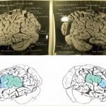Un nuevo estudio indica que el cerebro Einstein era diferente