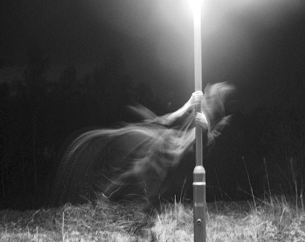 Imágenes aterradoras 2012 (15)