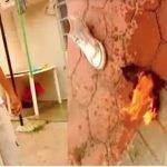 Jóvenes mexicanos queman vivo a un gato