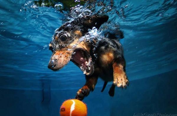 Underwater Dogs Seth Casteel (1)