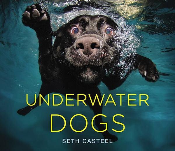 Underwater Dogs Seth Casteel (10)