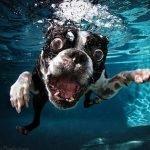 Perros bajo el agua, por Seth Casteel