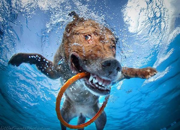 Underwater Dogs Seth Casteel (3)
